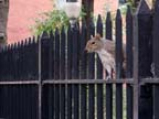 Railing squirrel